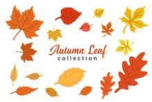 Design Autumn Leaves Collection Design