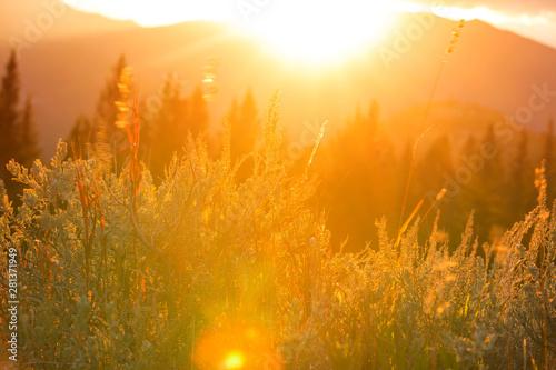 Fototapeta Autumn meadow obraz na płótnie
