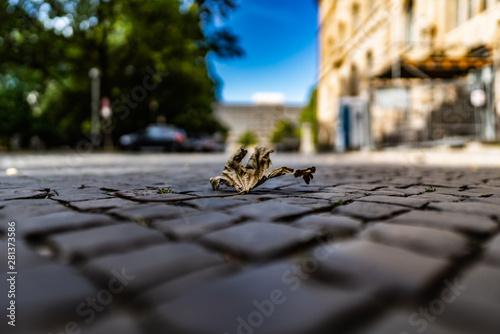 Canvastavla Laubblatt auf Straßenpflaster aus der Ameisenperspektive