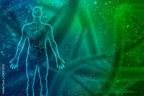 Obraz 2d illustration Human Male Muscle Body - fototapety do salonu