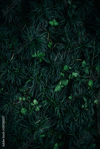 Deep green plants leaves flat lay view from above - 281380357