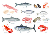 Set Of Seafood. Fish, Mollusks And Crustaceans. Vector Illustration Of Sardines, Mackerel, Salmon, Tuna, Herring And Dorado In Cartoon Flat Style. Octopus, Shrimp, Oyster, Mussel, Squid, Lobster.