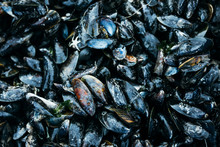A Fresh Batch Of Mussels
