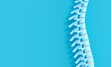 3d Render Image Of A Spine On ...