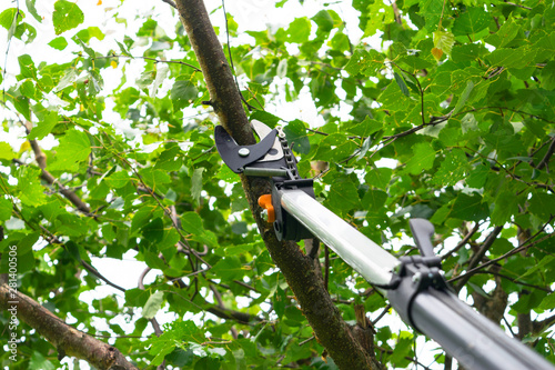 Photo sur Toile Pierre, Sable Seasonal pruning trees with pruning shears. Gardener pruning fruit trees with pruning shears. Taking care of garden. Cutting tree branch.