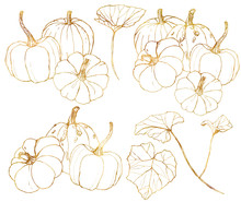Vector Golden Pumpkins Set For...