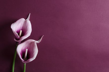 Purple Calla Flowers On The Violet Background. Empty Space For Design