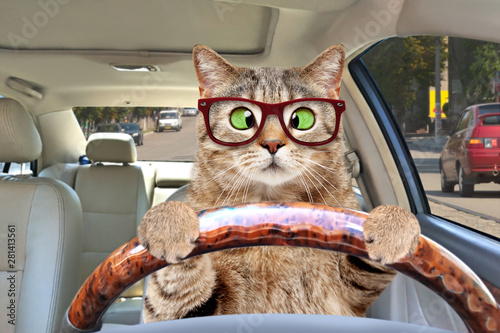 Portrait of a cross-eyed cat with glasses driving a car Canvas Print
