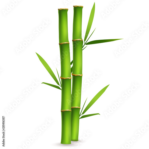 Slika na platnu Realistic bamboo sticks with leaves and shadow