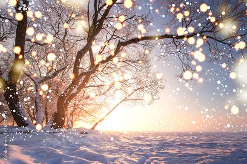 Foto auf Gartenposter Baume Christmas background. Magic glowing snowflakes in winter nature landscape. Beautiful winter scene with bokeh. Winter fairytale. Illuminated lights