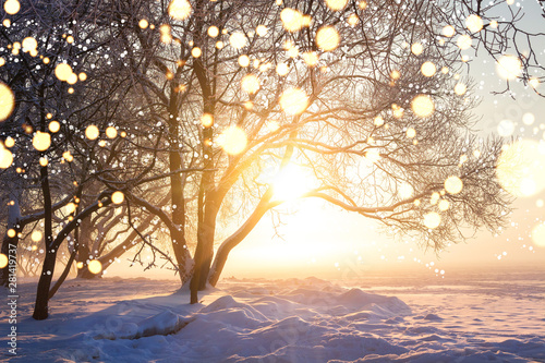 Winter christmas background. Illuminated snowflakes bokeh. winter nature landscape with bright sun. Snowflakes in sunlight. Winter scene