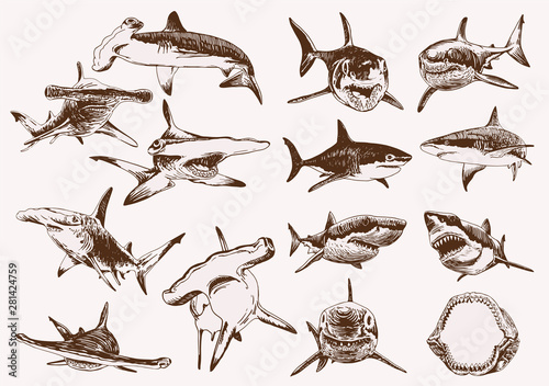 Graphical vintage set of sharks , vector illustration Wallpaper Mural