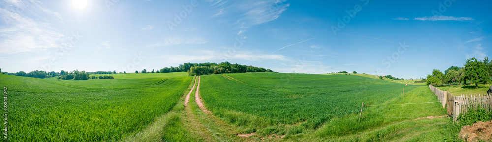 Fototapety, obrazy: Panorama of summer green field. European rural view. Beautiful landscape of wheat field and green grass with stunning blue sky and cumulus clouds in the background.