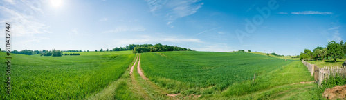 Foto op Aluminium Pistache Panorama of summer green field. European rural view. Beautiful landscape of wheat field and green grass with stunning blue sky and cumulus clouds in the background.