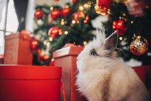 Rabbit Sitting On The Christmas Decoration's Background
