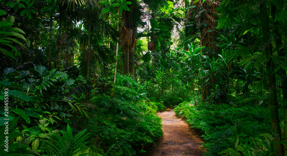 Fototapety, obrazy: Southeast Asian tropical rainforest with path
