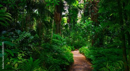 Obraz Southeast Asian tropical rainforest with path - fototapety do salonu