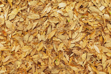 Orange Leaves On The Ground Surface In The Park
