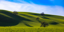 Rolling Green Hills In Northern California