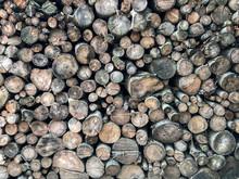Wood Texture For The Background Of Sawed Tree Trunks. Warehouse Of Firewood For Heating, Fires, Fireplaces.
