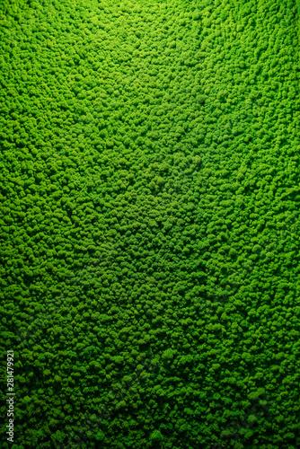 tekstura-zielony-mech-z-gornym-twardym-swiatlem