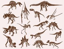 Vintage Set Of  Dinosaur Skele...