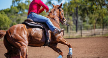 Horse And Rider Competing In Barrel Race At Outback Country Rodeo