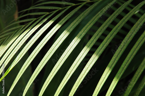 Poster Fleur Tropical palm leaves, floral pattern background