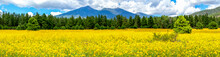 Flowers And Mountains. Mexican Sunflower Field In Flagstaff Arizona Panoramic