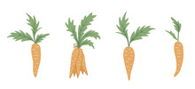 Vector Set Of Cartoon Style Carrots. Flat Simple Illustration With Root Vegetables. Clip Art For Children's Design..