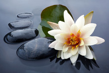 Spa Still Life With Water Lily...