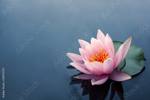 Fotografia  Beautiful pink lotus or water lily flowers blooming on pond