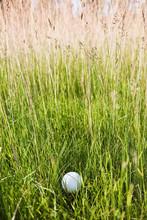 Golf Ball In Grassy Field