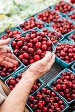 Man's Hands Holding Boxof Fresh Red Cherries In Market