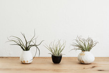 Close Up Of Varieties Of Air Plants In Terracotta Pot On Wooden Shelf