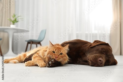 Foto auf Leinwand Logo Cat and dog together looking at camera on floor indoors. Fluffy friends