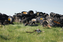 Pile Of Discarded Auto And Tractor Tires In Rural Landfill