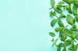 Leinwandbild Motiv Fresh green mint leaves on blue background, flat lay. Space for text