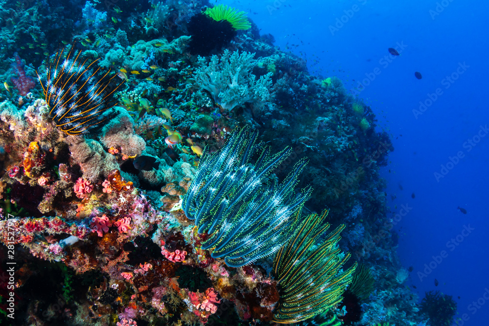 Delicate feather stars on a tropical coral reef