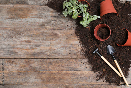 Poster Jardin Flat lay composition with soil and gardening tools on wooden background, space for text