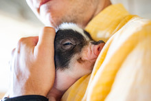 Hugging Little Piglet Adorable...