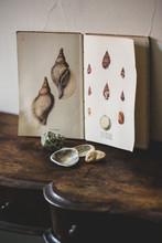 Venus Ear Shells With Vintage Card On Table