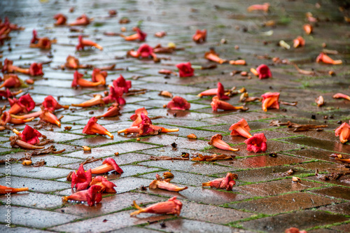 red flowers that have fallen on the ground from a tree