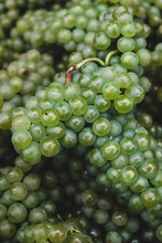 Close Up Of Green Grapes In Vineyard