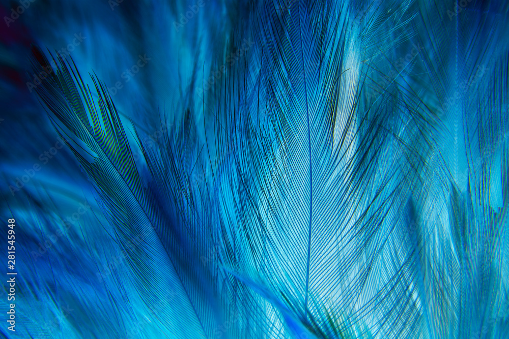 Fototapeta blue feather texture background