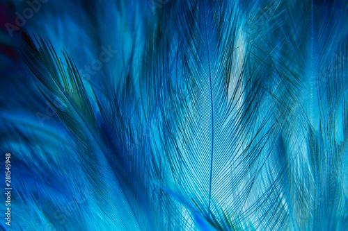 Fototapeta blue feather texture background obraz