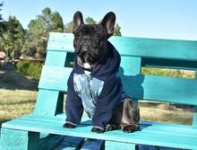 Bulldog Frances Con Buso En La Naturaleza