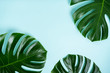 Leinwanddruck Bild - Сlose-up of monstera leaves on a turquoise light blue background with space for text. Trend frame with tropical mood.