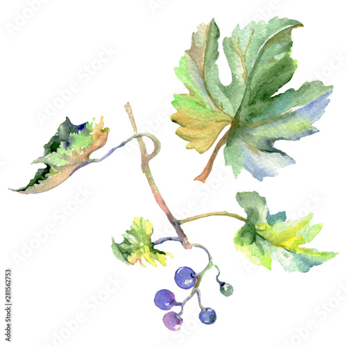 Grape berry healthy food in a watercolor style isolated. Watercolor background set. Isolated fruit illustration element. Fototapete