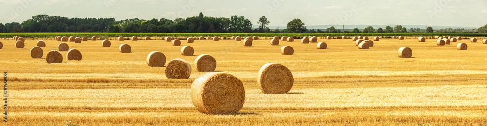 Fototapety, obrazy: Strohballen auf dem Feld